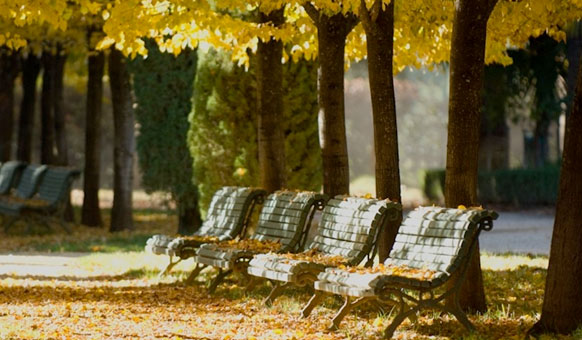 Benches-Autumn-Leaves.jpg