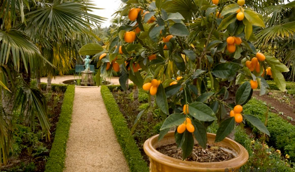 Orange-Tree-Path.jpg