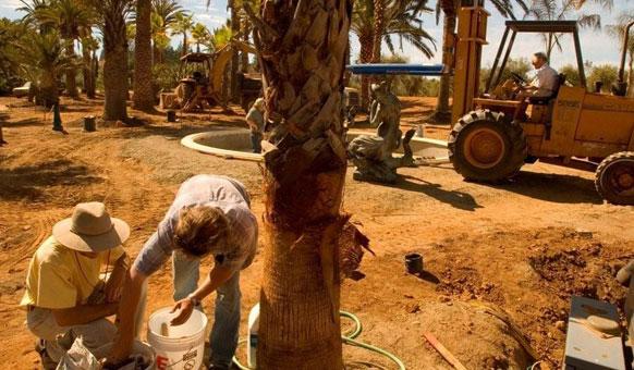 Students-Planting-Palms.jpg